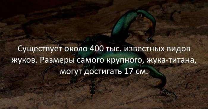 Интересные факты (10 фото)