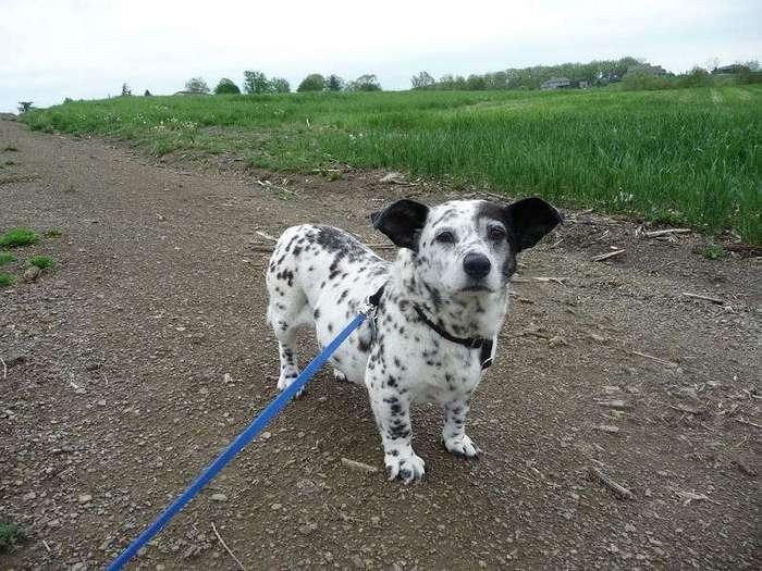 Самые необычные породы собак
