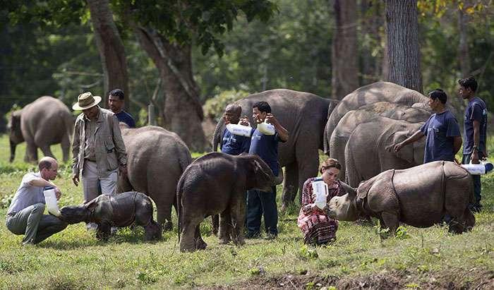 В индийском парке ради спасения носорогов убивают людей