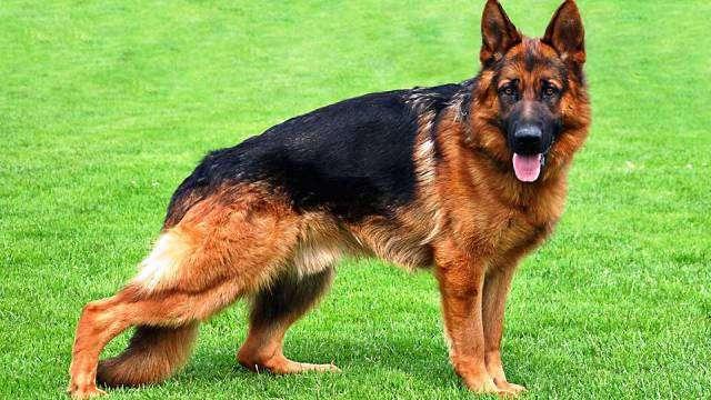25 самых опасных пород собак