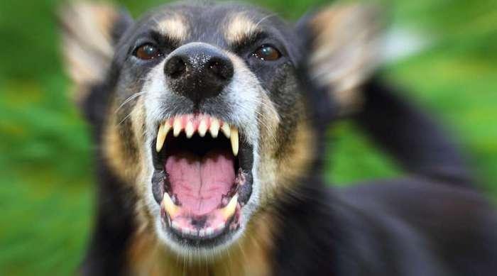 Что делать, если напала собака