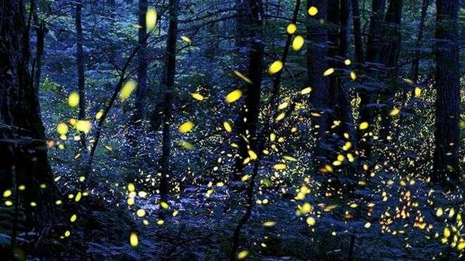 Шоу светлячков: фантастическая синхронная волна света