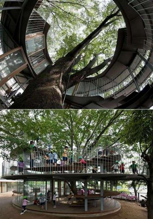От вокзала до детсада: 9 удивительных зданий, построенных вокруг деревьев