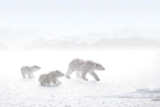 Фотограф делает отличные снимки дикой природы не выходя из своей комнаты