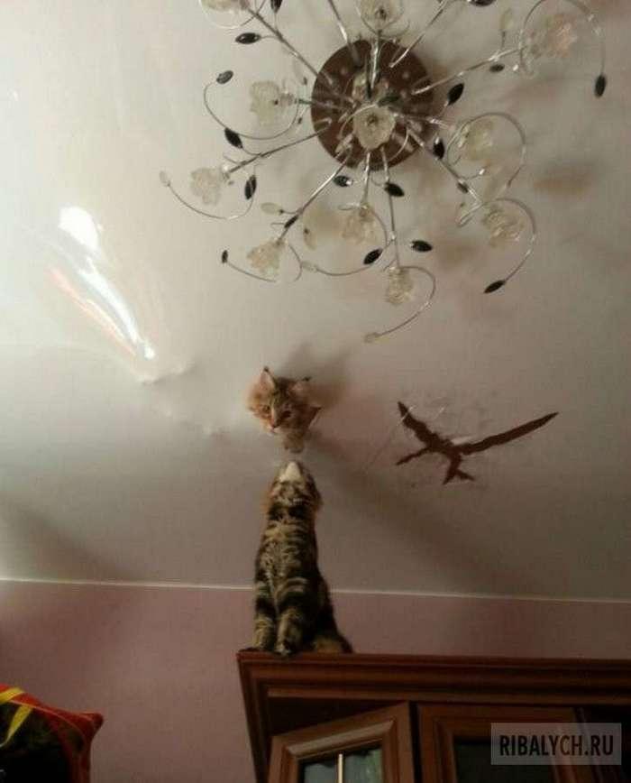 Мейн-кун или хана натяжному потолку (4 фото)