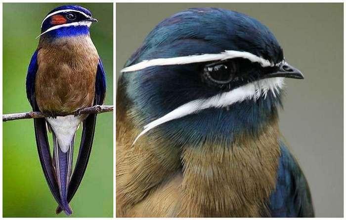 Поразительное великолепие фауны - 20 ярких птичек-невеличек