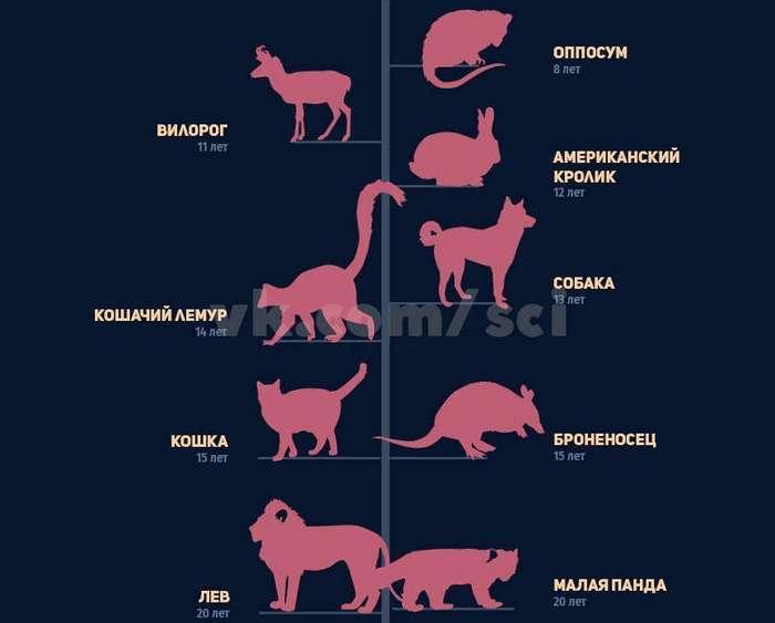 Продолжительность жизни животных.