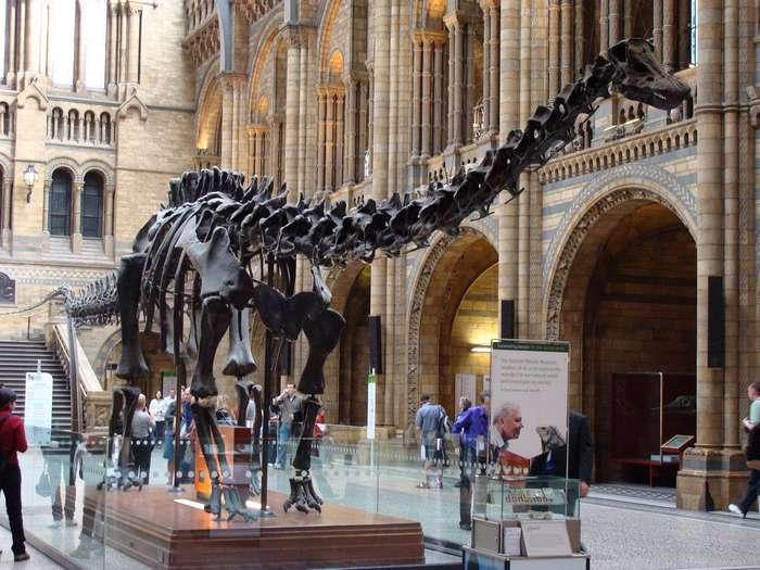 Почему животные сегодня не вырастают большими, как динозавры?