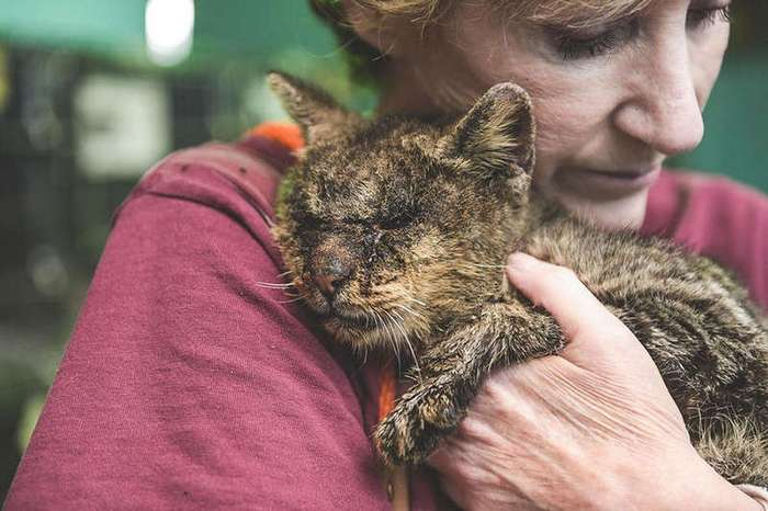 Женщина взяла на руки кота, к которому другие боялись даже подходить