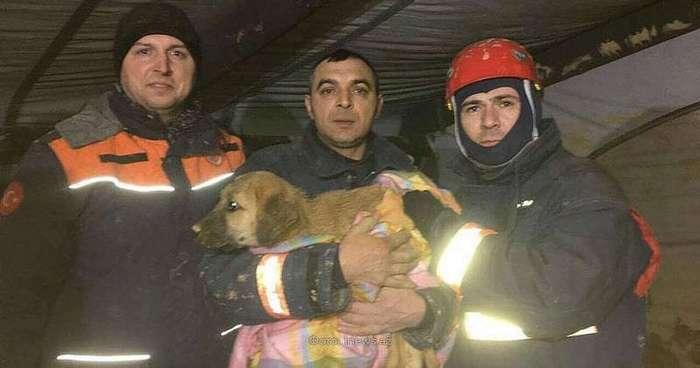 Турецкие спасатели 10 дней доставали щенка из колодца
