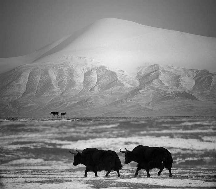 Лучшие черно-белые фотографии 2016 года