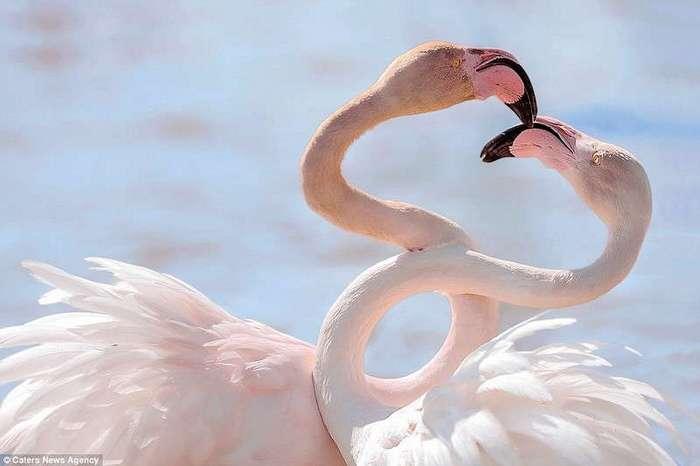 Животные тоже отмечают День всех влюбленных!