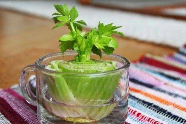 Овощи, которые можно с лёгкостью выращивать дома