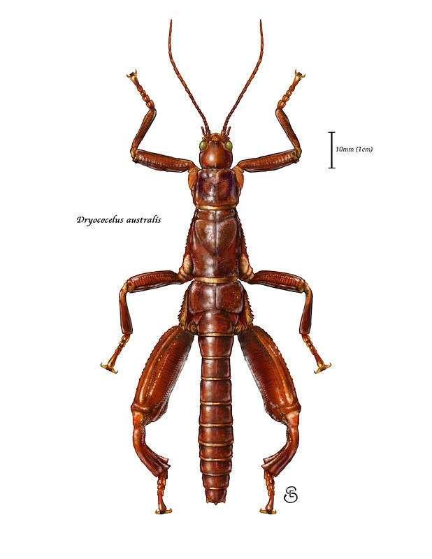Самое редкое насекомое на земле