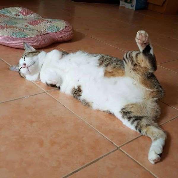 Котей, рожденный без передних лап