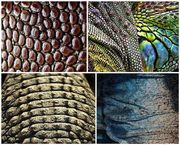 Жизнь вблизи - красота и геометрия природы