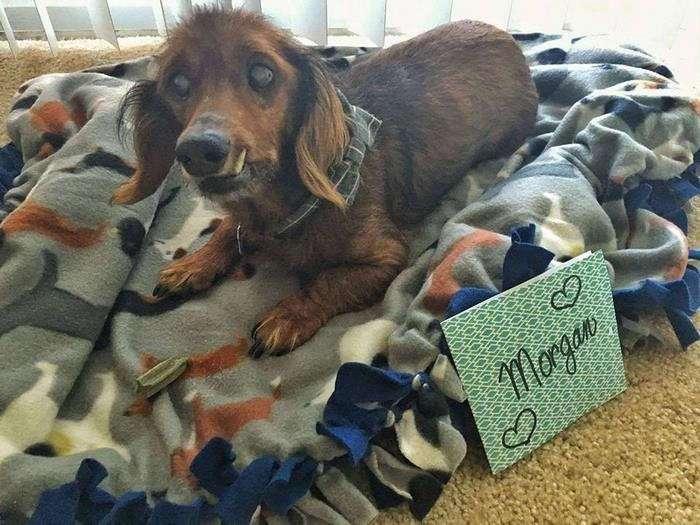 18-летний пес катается на мотоцикле и ждет открыток ко дню рождения!