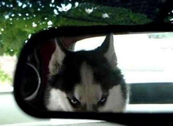 -не буди во мне зверя-: милые сердитые животные