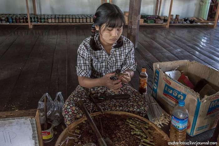 Как крутят сигары в Мьянме