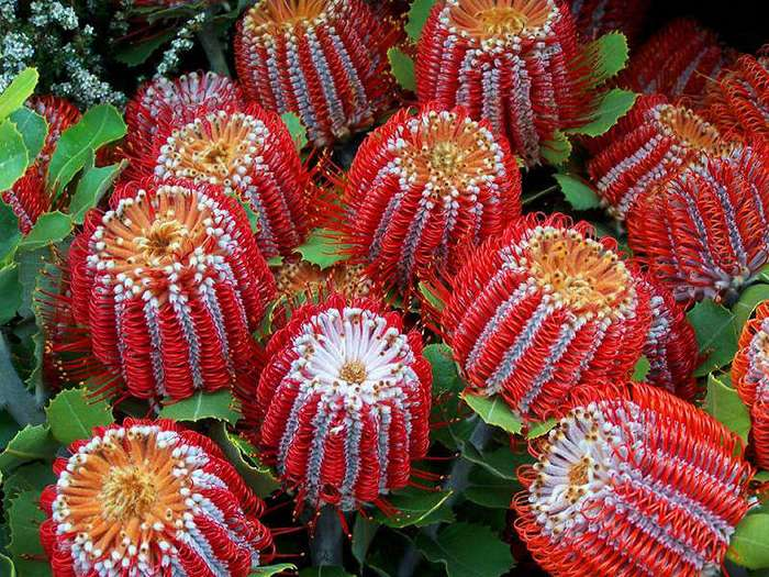 Вы реально поразитесь и удивитесь, глядя на эти сумасшедшие цветы и растения мира