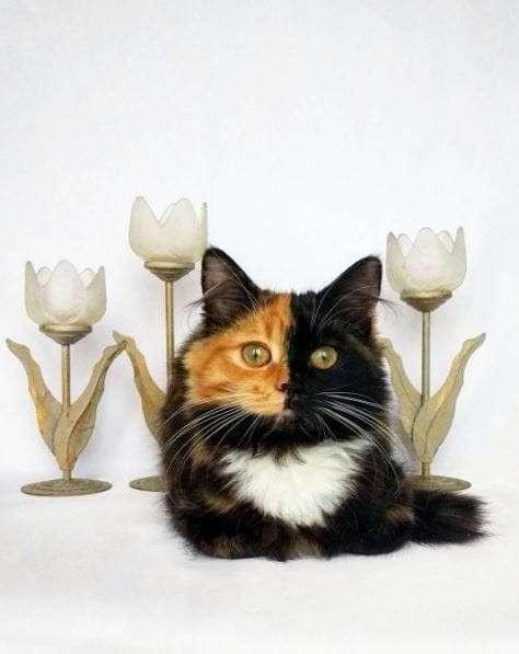 Яна - кошка с двумя лицами!