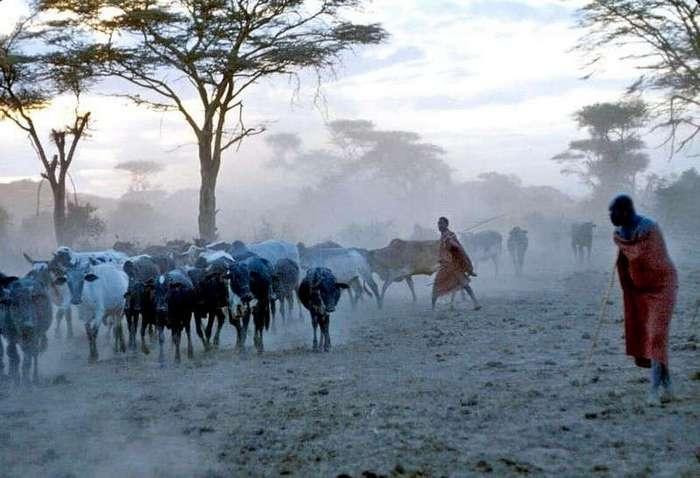 С такой дикостью можно столкнуться только в Африке!