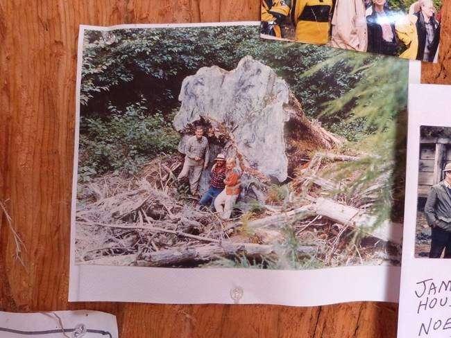 Парень 22 года вырезал домик хоббита в огромном пне