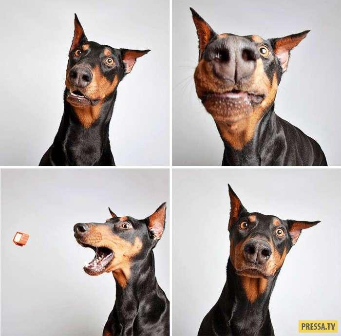 Креативная идея для помощи бездомным собакам (10 фото)