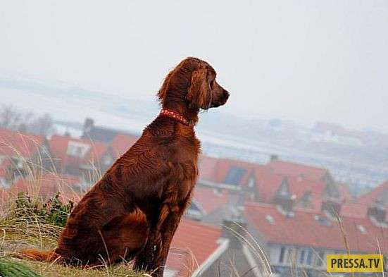ТОП-10 интересных и удивительных фактов о собаках (10 фото)