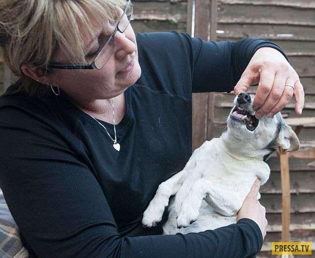 Собачка - любительница Кока-колы, осталась без зубов (9 фото)