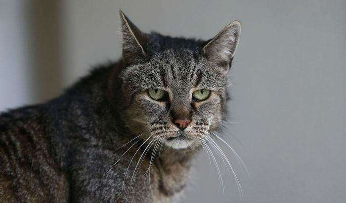 Мускат (Nutmeg) – возможно самый старый кот в мире. Ему 31 год!