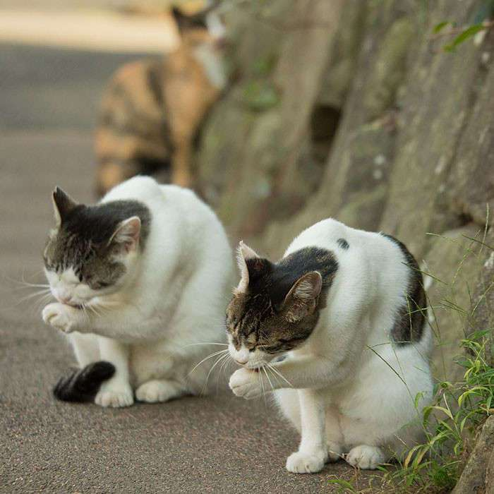 Бездомные кошки Токио: из Японии с любовью