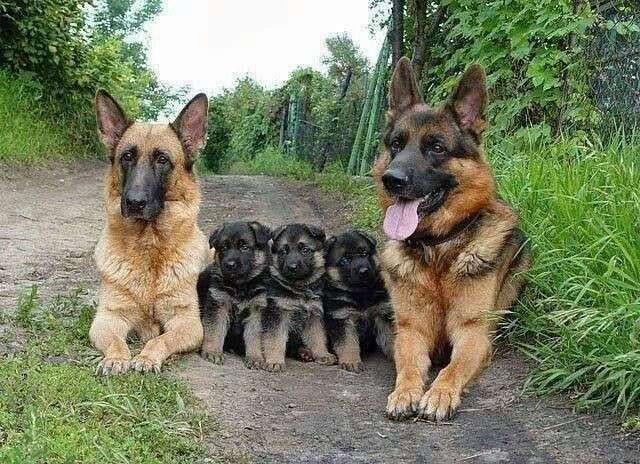 Очаровательные семейные портреты животных
