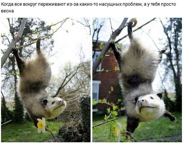 Веселые картинки и смешные фото приколы для настроения (11 фото)