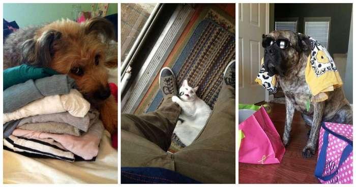 Домашние животные в курсе, когда вы собираетесь на отдых без них