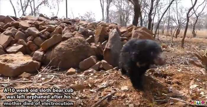 Преданный медвежонок