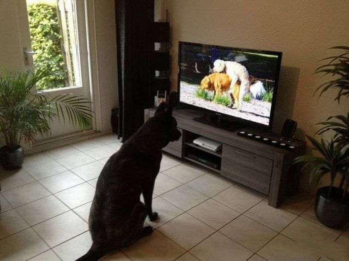 Забавные фото животных с их остроумными хозяевами (53 фото)