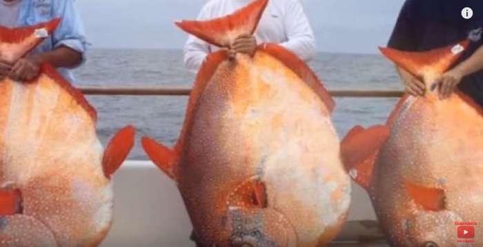 10 самых жутких существ, пойманных на рыбалке