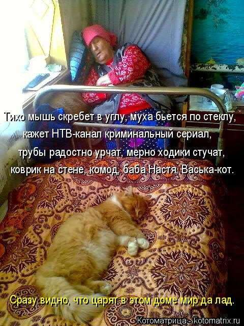 Новая котоматрица на Бугаге (25 фото)