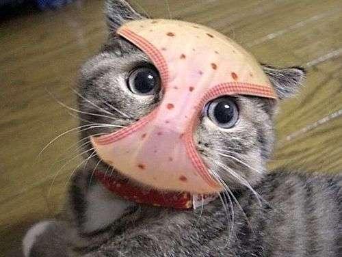 Коты, которым все равно (15 фото)