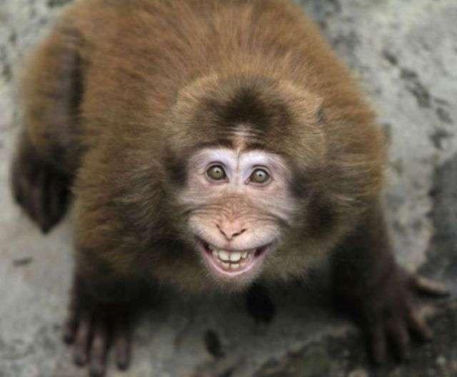 Смешные животные (65 фото)