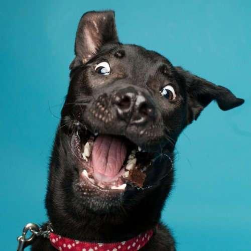 Портреты собак, которым плевать на фотогеничность (26 фото)