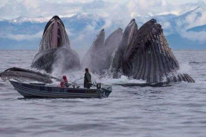 Потрясающие фото, сделанные в подходящий момент (33 фото)