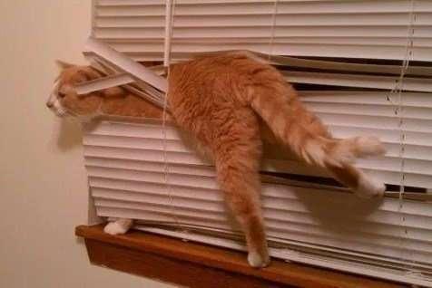 Запутавшиеся кошки, которым нужна помощь (10 фото)