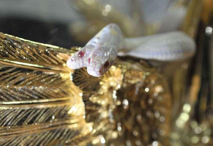 Двухголовая змея (11 фото)