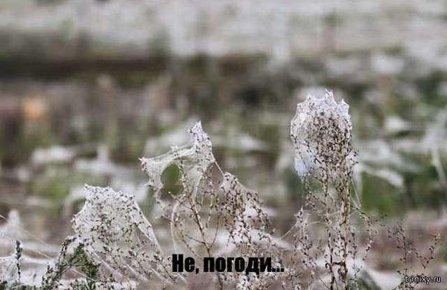 Снег посреди лета? Нет - гораздо хуже (6 фото)