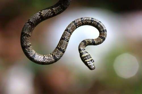 Топ-25: шокирующие факты про змей, которые вы могли не знать