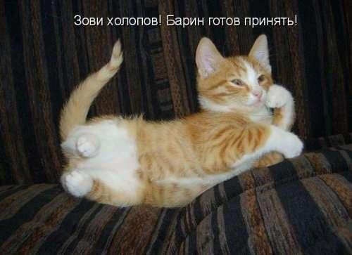 Рыжая котоматрица (12 шт)