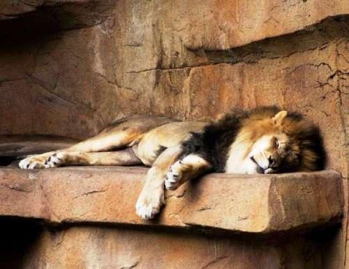 Мимишные фотографии спящих животных, которые вы должны увидеть (25 фото)