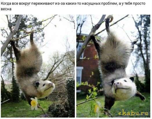 Прикольные картинки)))